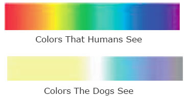 Through The Eyes Of Your Dog Pets Doc